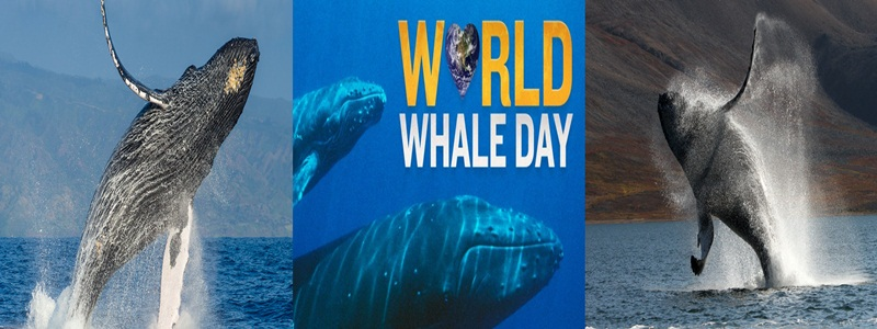 Image result for world whale day 2018 images
